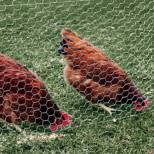 توری مرغی | قیمت توری مرغی | خرید و فروش توری مرغی | شهر مفتول ...